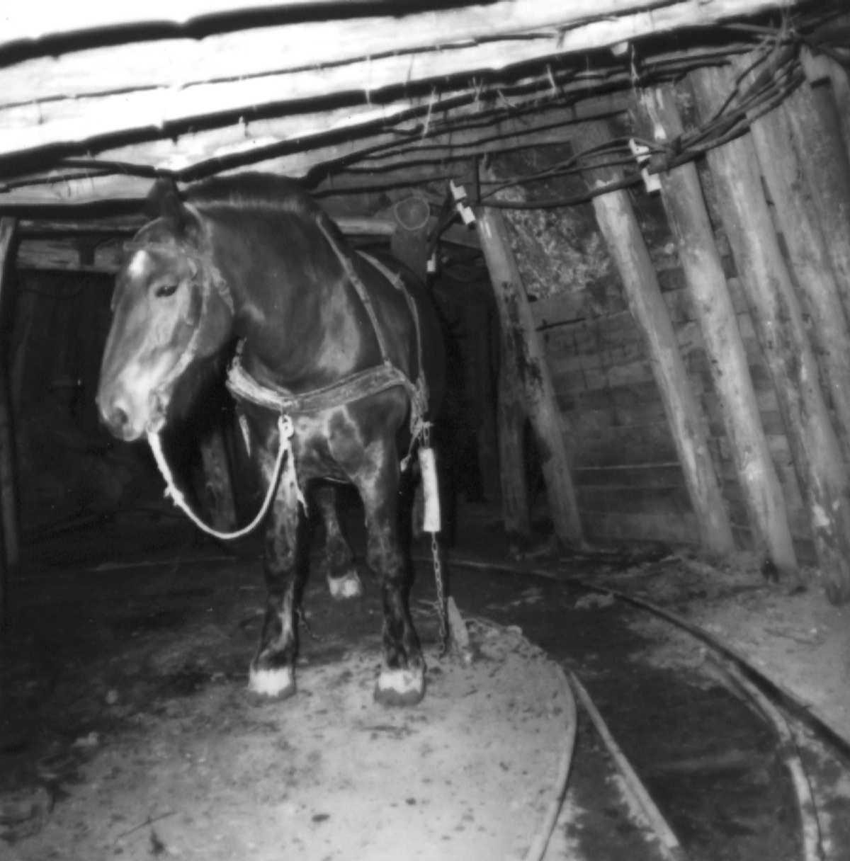 Ő ismerte a legközelebbről:  A Csillag nevű  bányaló a Lahóca üzemben, ahol a réz, arany ezüst ércek bányászata 1979-ig folyt.